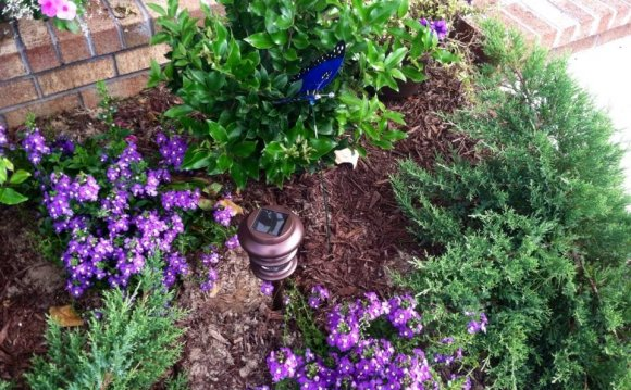 Carolina Home and Garden