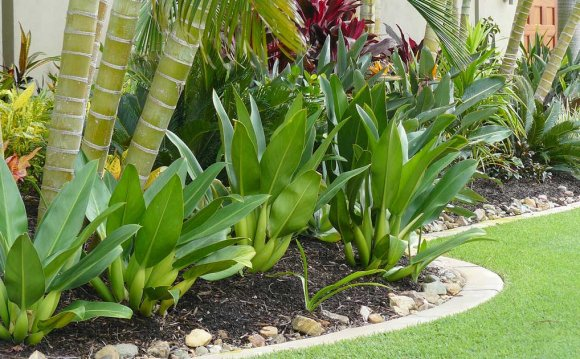 Tropical Landscaping Design