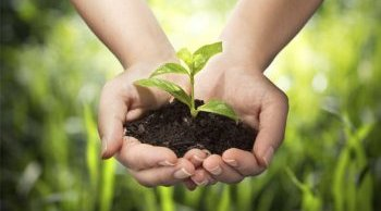 10 GARDENING TIPS TO FIGHT GLOBAL WARMING
