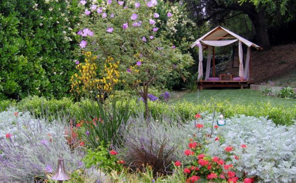 Backyard Landscape Design on a budget