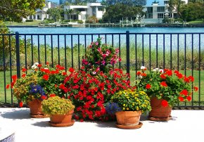 A potted garden with colorful flowers