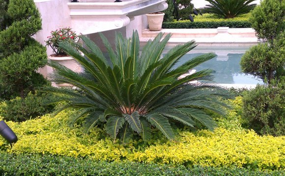 Landscaping Design Miami