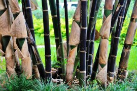 bamboo retreat landscape design miami south florida
