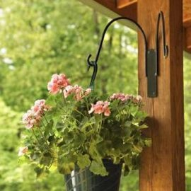 Hanging baskets on your porch can add flowers to your landscape without taking up space in the yard.