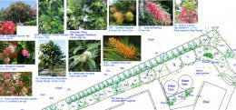 Landscape Design Gold Coast, Landscape Design