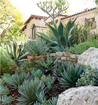 overplant succulents and perennial flowers