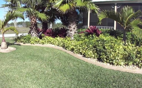 Palm trees Landscape Design