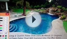 Palm Tree Landscaping Design Houston Texas Pool Landscape