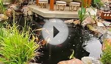 Traditional Japanese Koi Pond and Stream Landscape by San