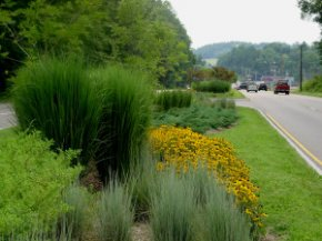 Why use Native Plants-They tend to be adaptable to the local climate